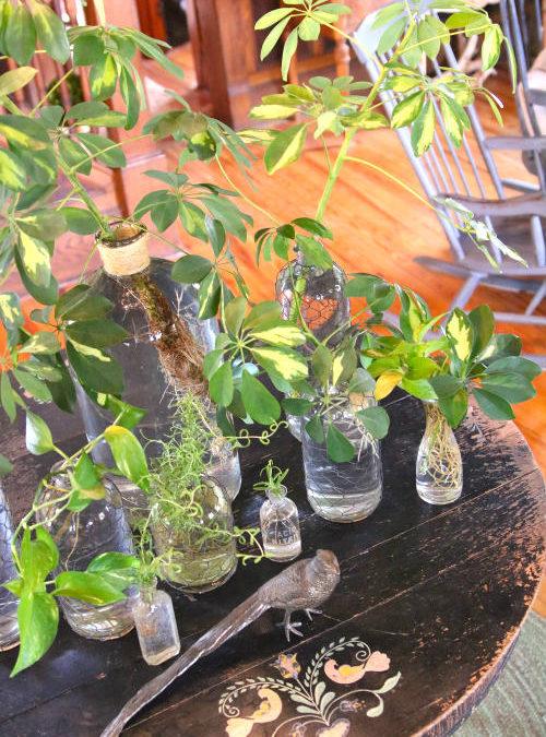 greenery in tiny bottles