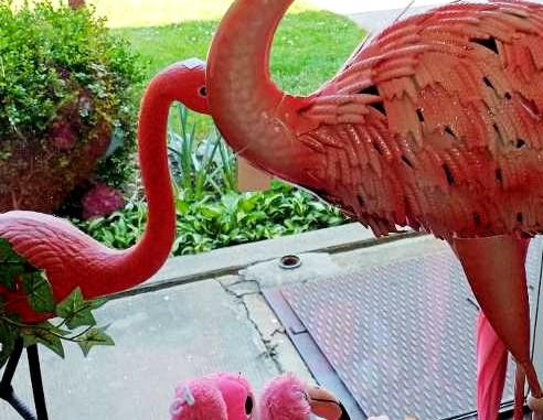 variety of pink flamingo at Bahoukas