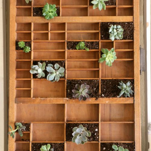 using a printer's drawer for succulents and air plants from TheSpruce.com